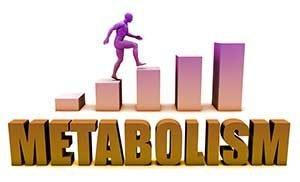 metabolism-101
